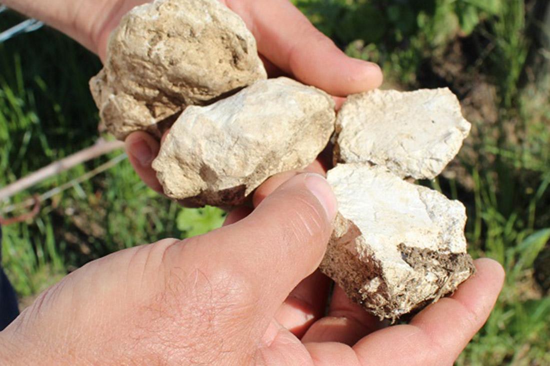 Terroir avec gros calcaires